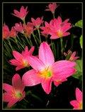 Beautiful Rainy Flowers